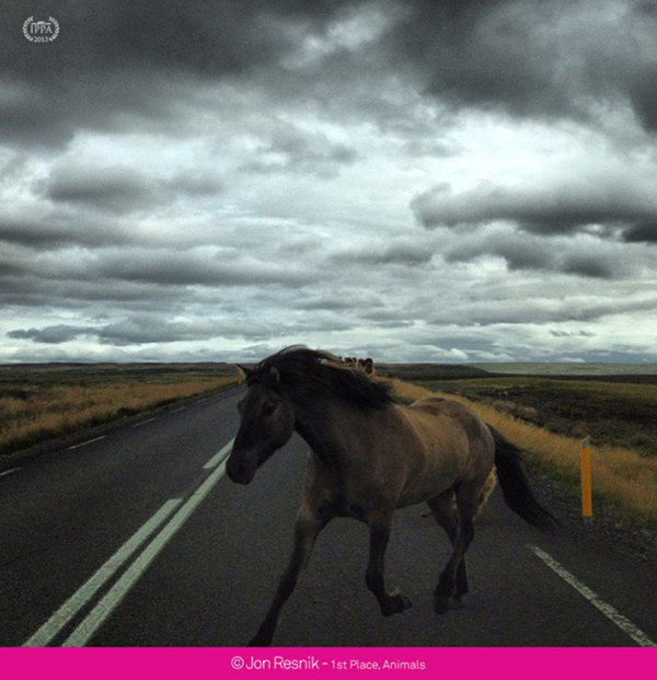 iphone fotograf yarismasi hayvan