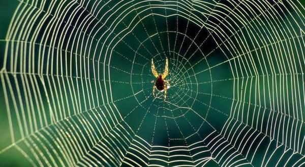 Hediyeye Göre Çiftleşme Süresini Belirleyen Örümcek